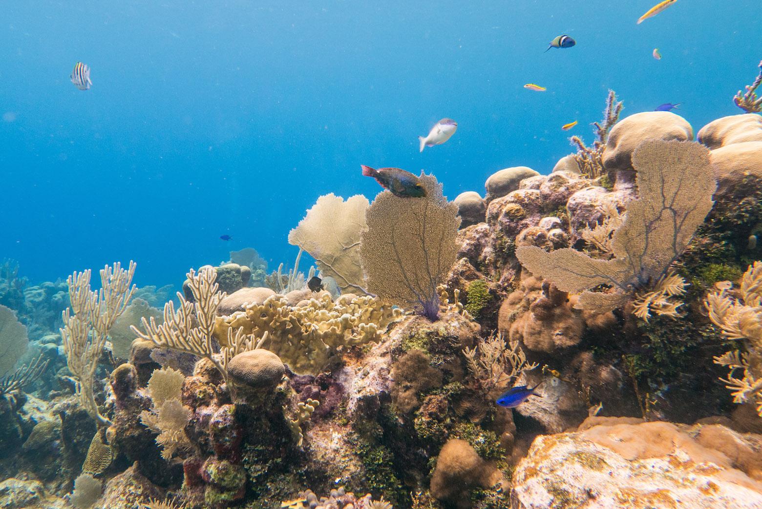 Scuba diving in the reefs of roatan island honduras - Roatan dive sites ...