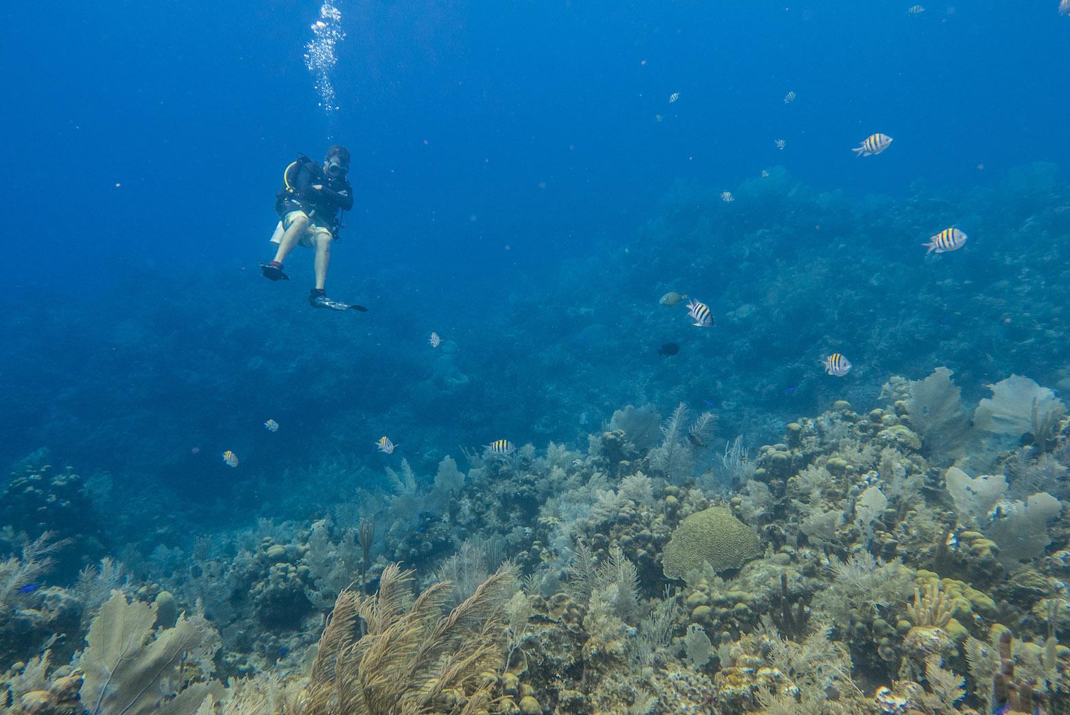 Scuba Diving in Reef off Roatan
